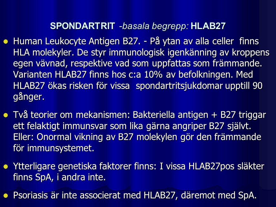 SPONDARTRIT -basala begrepp: HLAB27 Human Leukocyte Antigen B27. - På ytan av alla celler finns HLA molekyler. De styr immunologisk igenkänning av kro