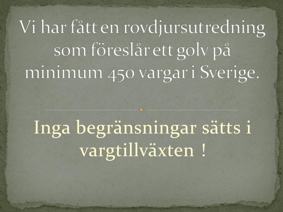 Att Sveriges vargstam som hör samman med en vargstam som består av fler hundratusen vargar inte skulle uppnå bevarandestatus är endast ett byråkratiskt inspel från varglobbyn!