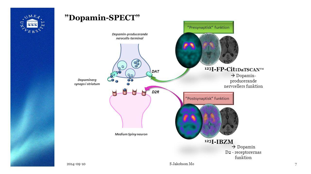 "Medium Spiny neuron Dopamin-producerande nervcells-terminal DAT  Dopamin- producerande nervcellers funktion ""Presynaptisk"" funktion 123 I-FP-Cit: DaT"