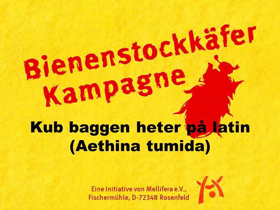Kub baggen heter på latin (Aethina tumida) Eine Initiative von Mellifera e.V., Fischermühle, D-72348 Rosenfeld