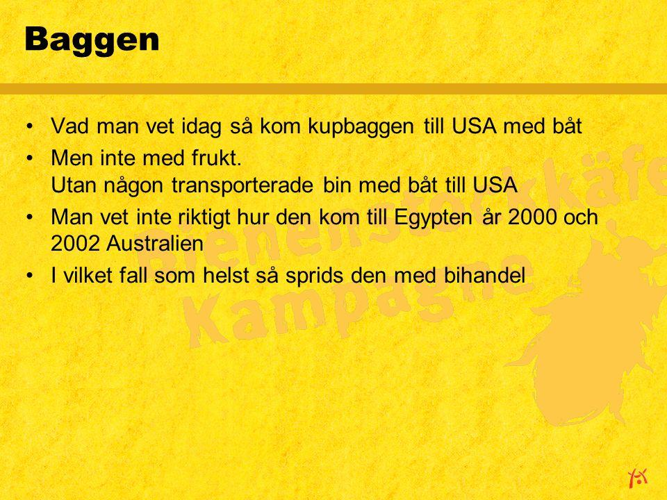 Baggen Vad man vet idag så kom kupbaggen till USA med båt Men inte med frukt.