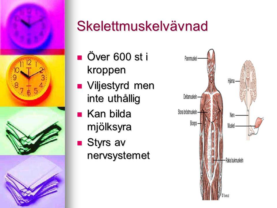Skelettmuskelvävnad Över 600 st i kroppen Över 600 st i kroppen Viljestyrd men inte uthållig Viljestyrd men inte uthållig Kan bilda mjölksyra Kan bild