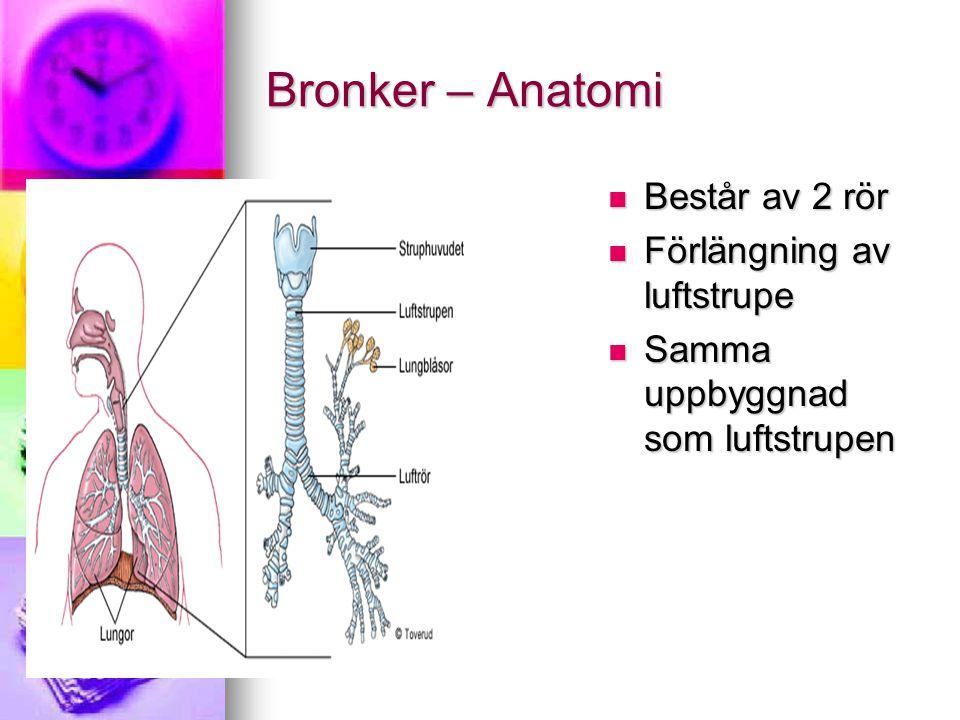 Bronker – Anatomi Består av 2 rör Består av 2 rör Förlängning av luftstrupe Förlängning av luftstrupe Samma uppbyggnad som luftstrupen Samma uppbyggna
