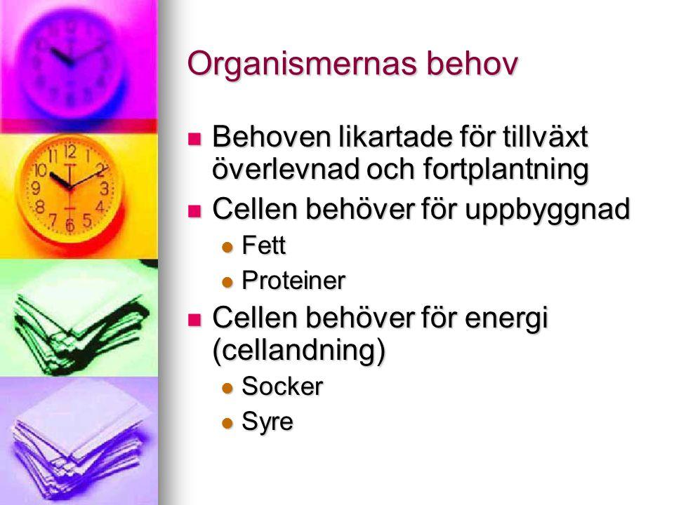 Organismernas behov Behoven likartade för tillväxt överlevnad och fortplantning Behoven likartade för tillväxt överlevnad och fortplantning Cellen behöver för uppbyggnad Cellen behöver för uppbyggnad Fett Fett Proteiner Proteiner Cellen behöver för energi (cellandning) Cellen behöver för energi (cellandning) Socker Socker Syre Syre