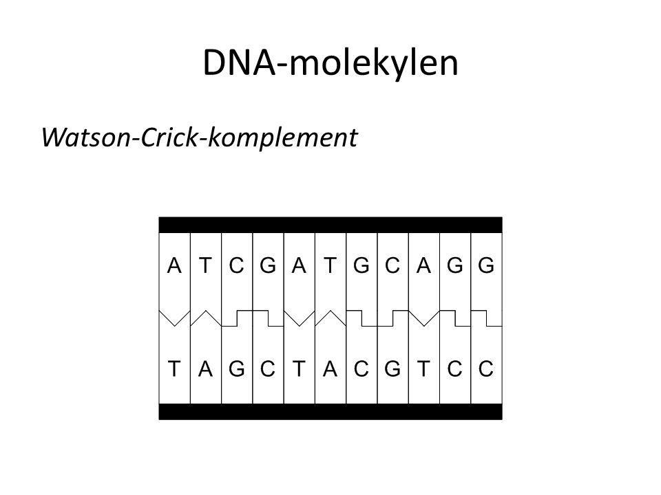 DNA-molekylen Watson-Crick-komplement
