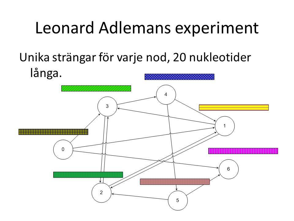 Unika strängar för varje nod, 20 nukleotider långa. Leonard Adlemans experiment