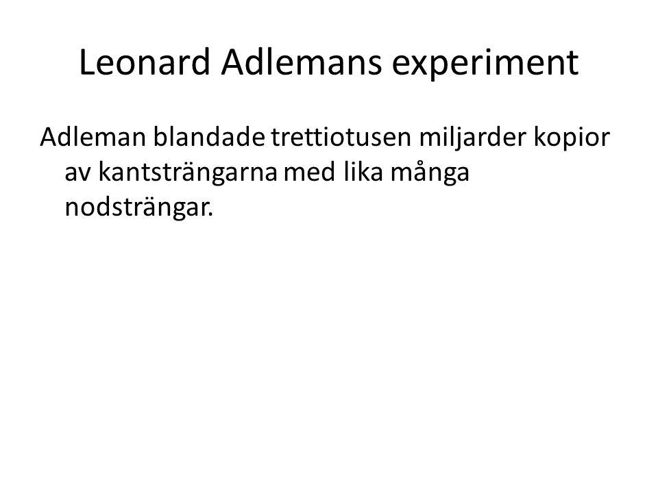 Adleman blandade trettiotusen miljarder kopior av kantsträngarna med lika många nodsträngar. Leonard Adlemans experiment