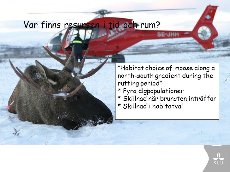 """Var finns resursen i tid och rum? """"Habitat choice of moose along a north-south gradient during the rutting period"""" * Fyra älgpopulationer * Skillnad n"""