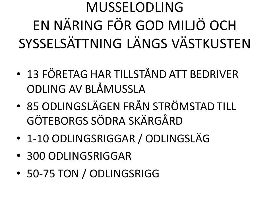 MUSSELODLING EN NÄRING FÖR GOD MILJÖ OCH SYSSELSÄTTNING LÄNGS VÄSTKUSTEN 13 FÖRETAG HAR TILLSTÅND ATT BEDRIVER ODLING AV BLÅMUSSLA 85 ODLINGSLÄGEN FRÅN STRÖMSTAD TILL GÖTEBORGS SÖDRA SKÄRGÅRD 1-10 ODLINGSRIGGAR / ODLINGSLÄG 300 ODLINGSRIGGAR 50-75 TON / ODLINGSRIGG