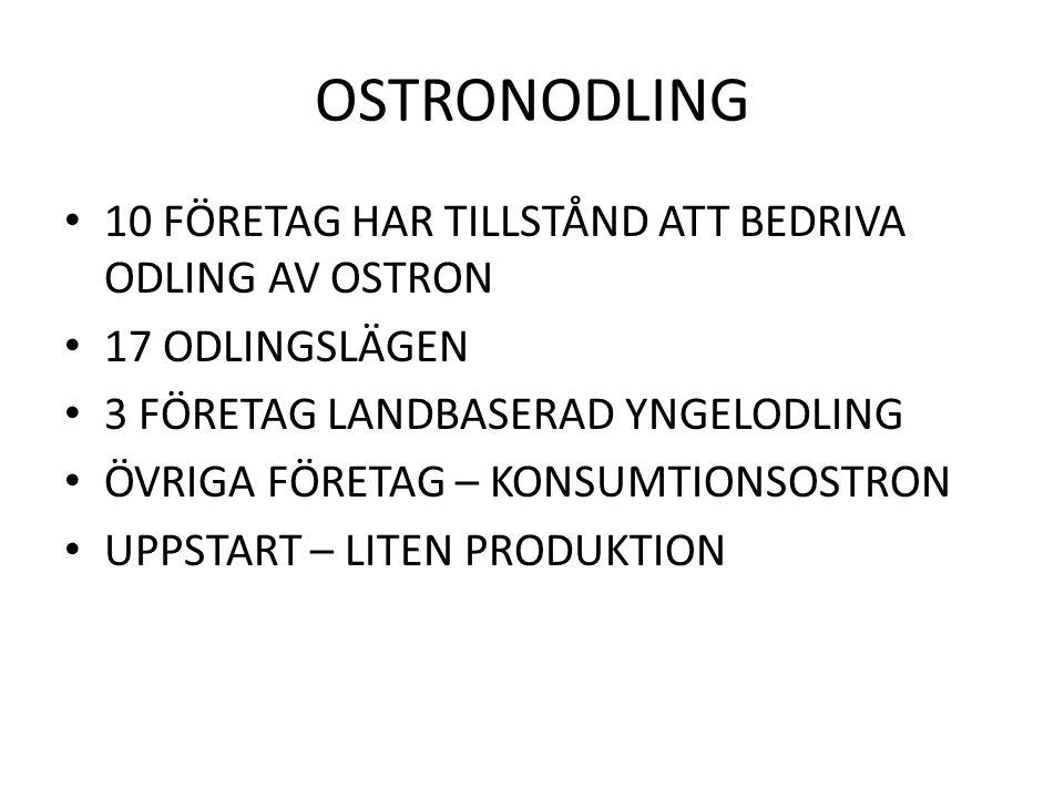 OSTRONODLING 10 FÖRETAG HAR TILLSTÅND ATT BEDRIVA ODLING AV OSTRON 17 ODLINGSLÄGEN 3 FÖRETAG LANDBASERAD YNGELODLING ÖVRIGA FÖRETAG – KONSUMTIONSOSTRON UPPSTART – LITEN PRODUKTION