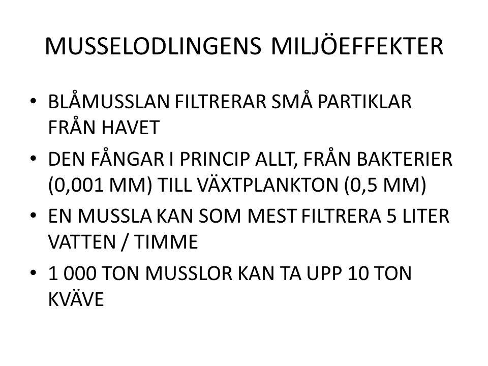 MUSSELODLINGENS MILJÖEFFEKTER BLÅMUSSLAN FILTRERAR SMÅ PARTIKLAR FRÅN HAVET DEN FÅNGAR I PRINCIP ALLT, FRÅN BAKTERIER (0,001 MM) TILL VÄXTPLANKTON (0,5 MM) EN MUSSLA KAN SOM MEST FILTRERA 5 LITER VATTEN / TIMME 1 000 TON MUSSLOR KAN TA UPP 10 TON KVÄVE
