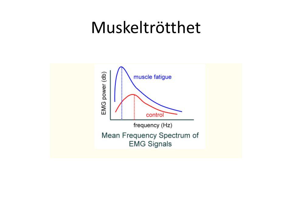 Muskeltrötthet