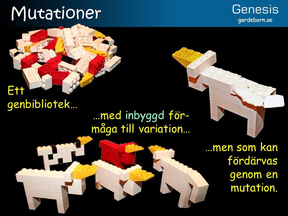 gardeborn.se Ett genbibliotek… …med inbyggd för- måga till variation… …men som kan fördärvas genom en mutation.