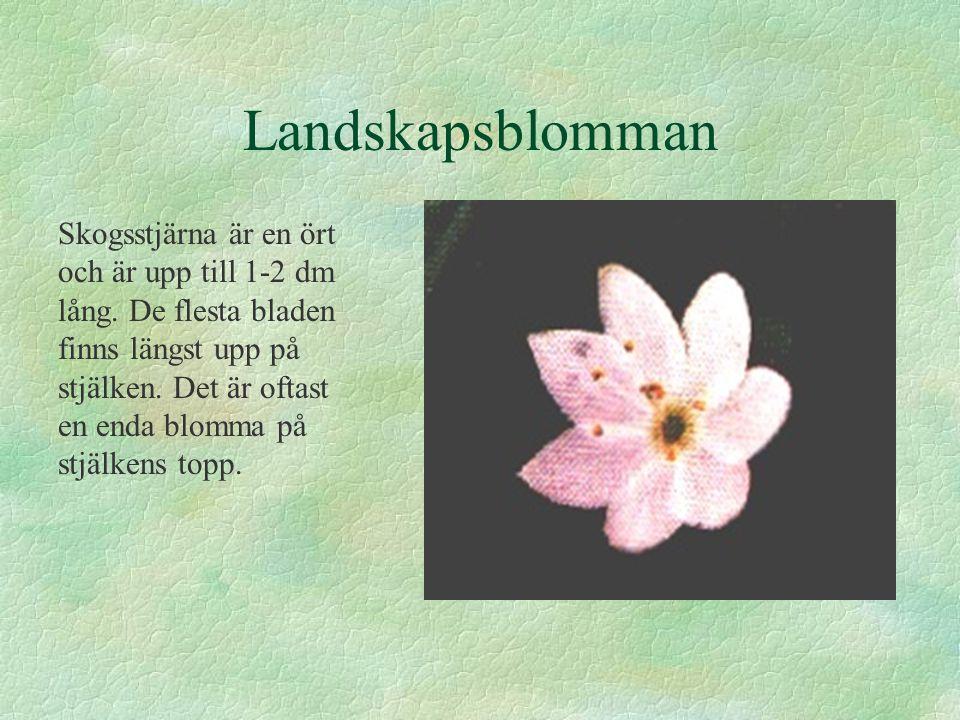 Landskapsblomman Skogsstjärna är en ört och är upp till 1-2 dm lång. De flesta bladen finns längst upp på stjälken. Det är oftast en enda blomma på st