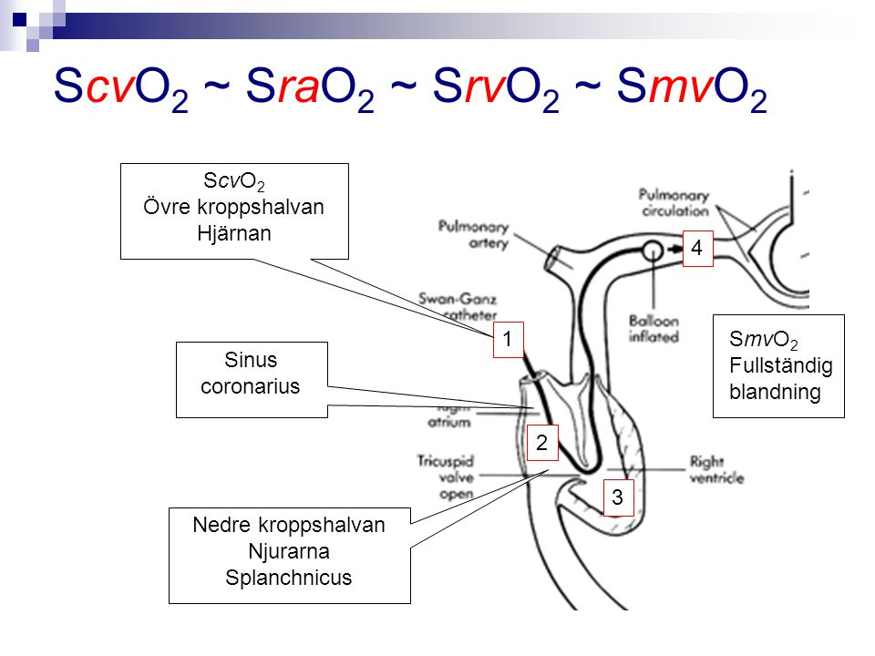 ScvO 2 ~ SraO 2 ~ SrvO 2 ~ SmvO 2 1 2 3 4 SmvO 2 Fullständig blandning Sinus coronarius Nedre kroppshalvan Njurarna Splanchnicus ScvO 2 Övre kroppshal