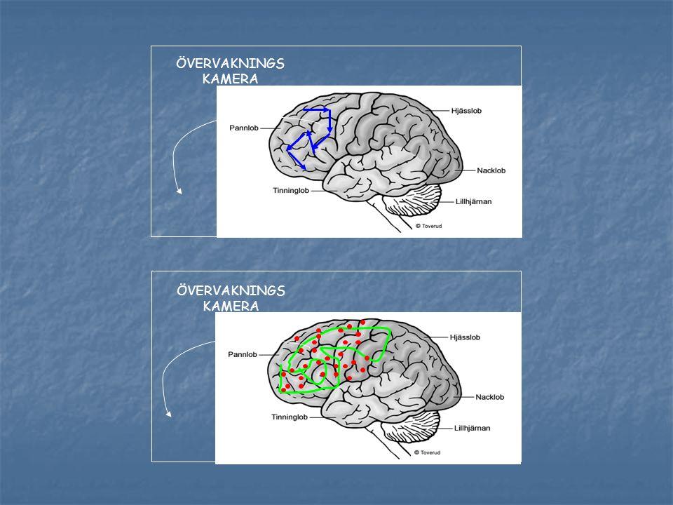 Det neuropsykologiska nätverket fragmenteras. Anterior Cingule