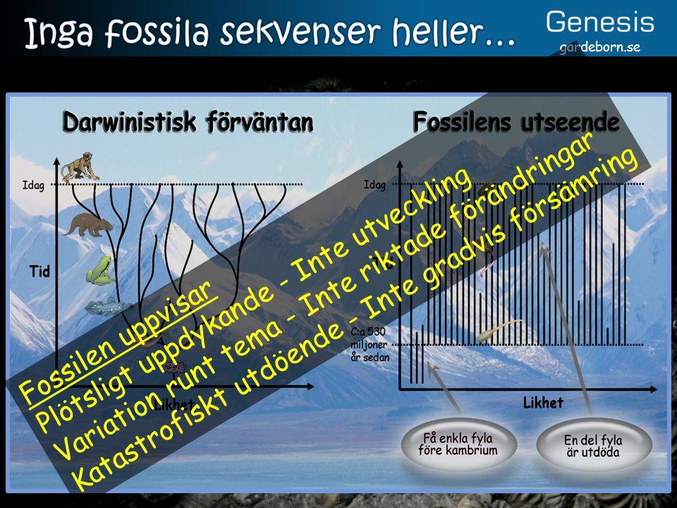 gardeborn.se Fossilen uppvisar Plötsligt uppdykande - Inte utveckling Variation runt tema - Inte riktade förändringar Katastrofiskt utdöende - Inte gradvis försämring