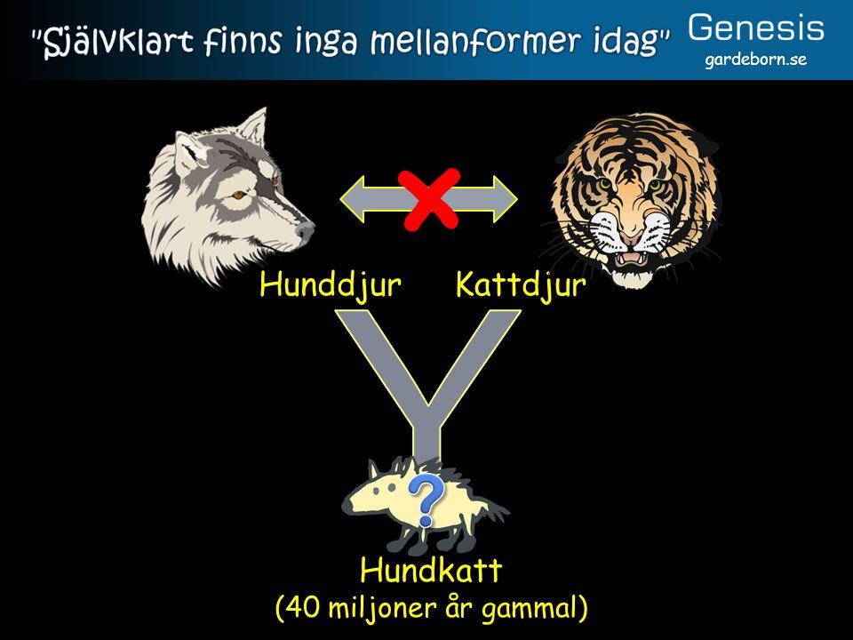 gardeborn.se Hundkatt (40 miljoner år gammal) KattdjurHunddjur ×
