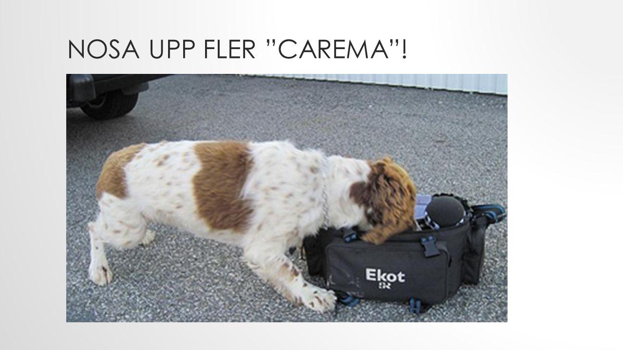 NOSA UPP FLER CAREMA !