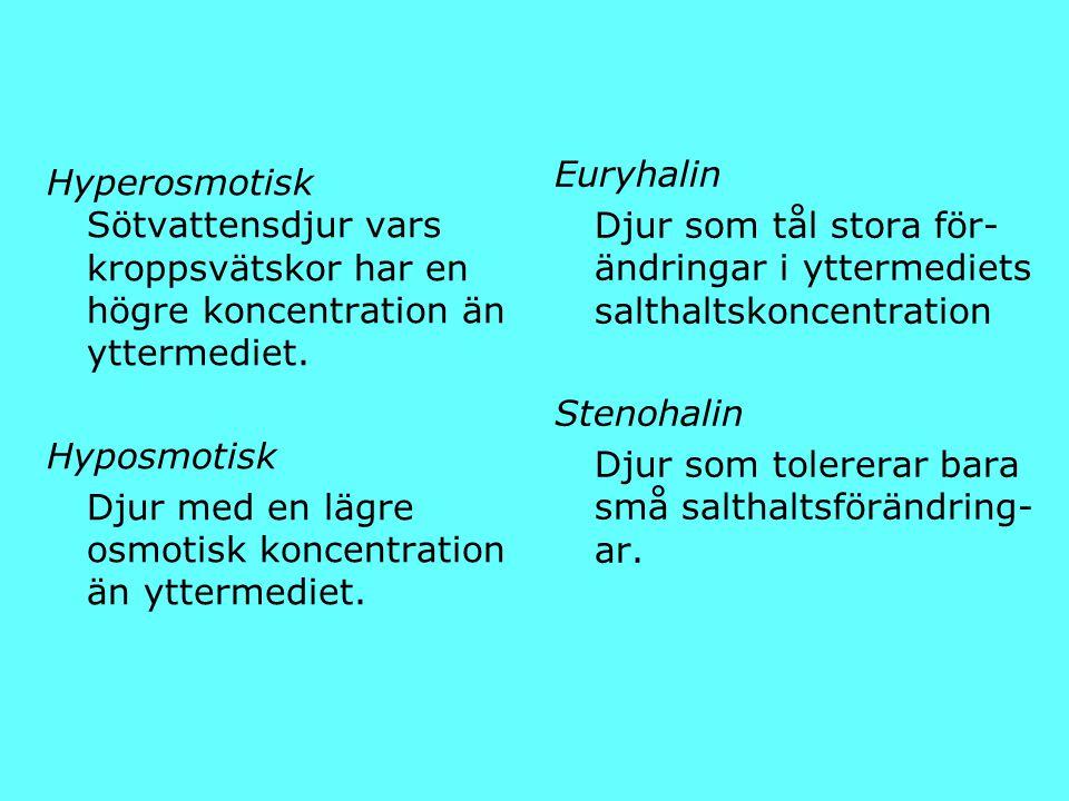 Hyperosmotisk Sötvattensdjur vars kroppsvätskor har en högre koncentration än yttermediet. Hyposmotisk Djur med en lägre osmotisk koncentration än ytt