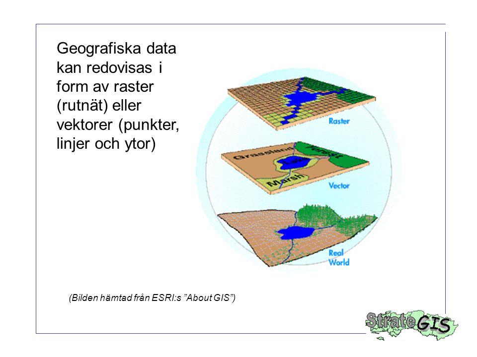"""Geografiska data kan redovisas i form av raster (rutnät) eller vektorer (punkter, linjer och ytor) (Bilden hämtad från ESRI:s """"About GIS"""")"""