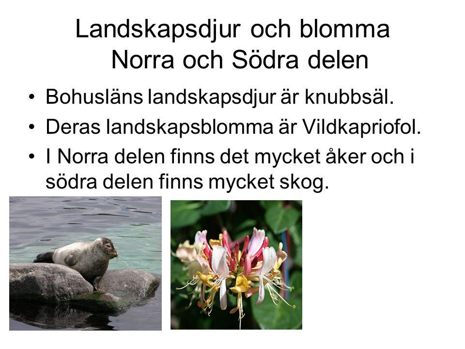 Landskapsdjur och blomma Norra och Södra delen Bohusläns landskapsdjur är knubbsäl. Deras landskapsblomma är Vildkapriofol. I Norra delen finns det my