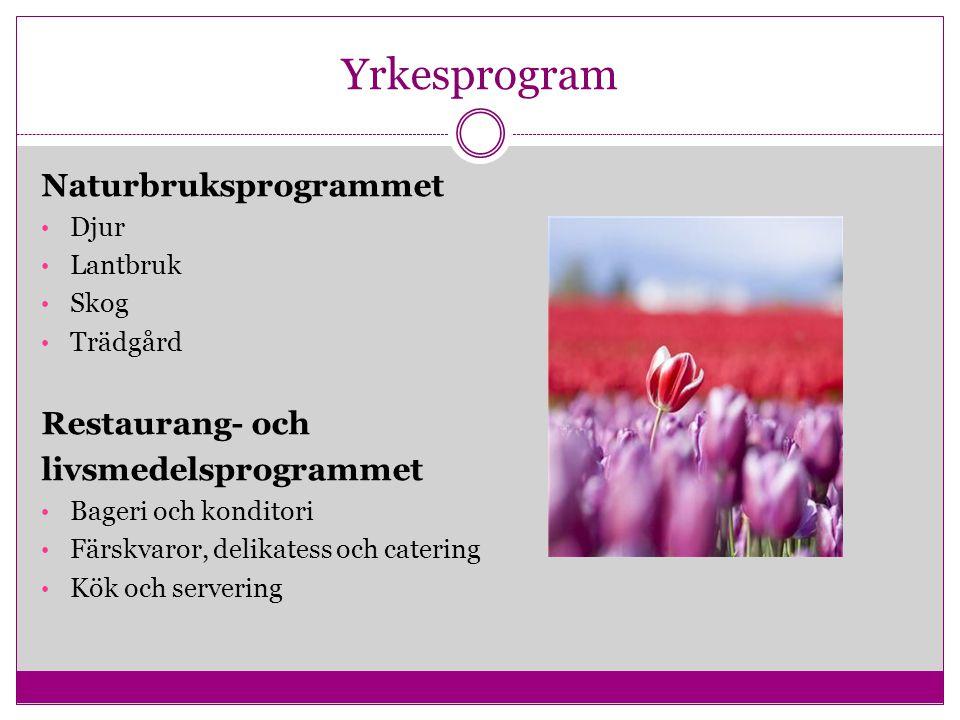 Yrkesprogram Naturbruksprogrammet Djur Lantbruk Skog Trädgård Restaurang- och livsmedelsprogrammet Bageri och konditori Färskvaror, delikatess och cat