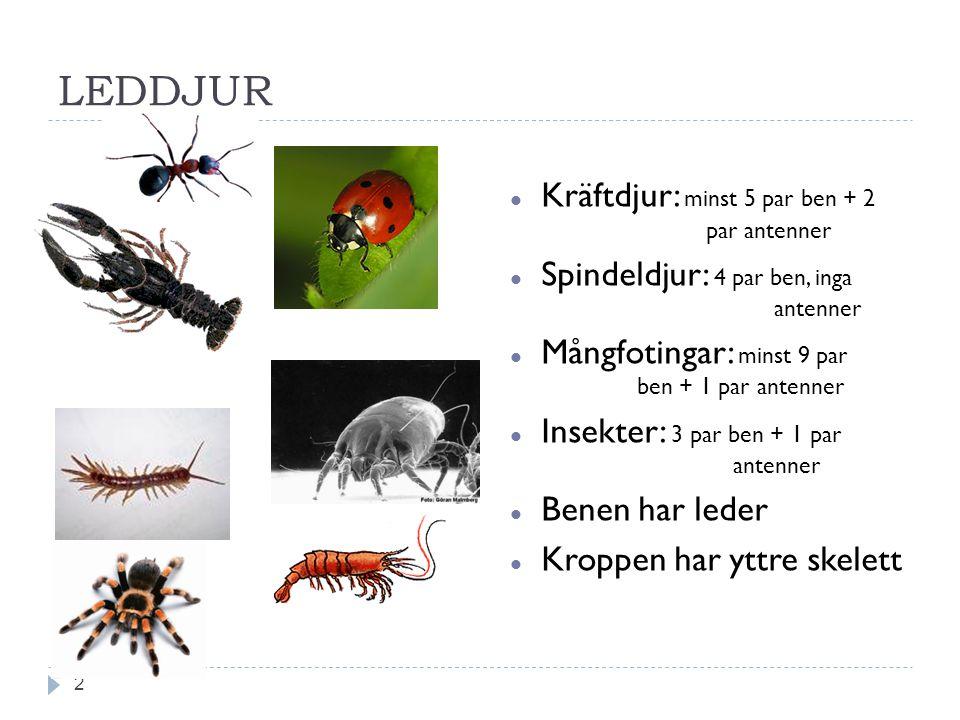 LEDDJUR Kräftdjur: minst 5 par ben + 2 par antenner Spindeldjur: 4 par ben, inga antenner Mångfotingar: minst 9 par ben + 1 par antenner Insekter: 3 p