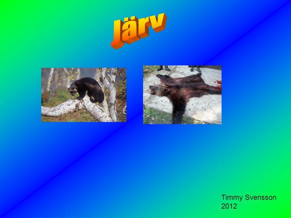 Järven har en långhårig päls och huvudet är fyrkantig och platt.Pälsen är mörkbrun.Järven är cirka 62-80 cm och cirka 45 cm hög över skuldrorna.Den väger mellan 10 och 16 kg.