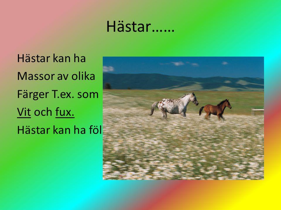 Hästar…… Hästar kan ha Massor av olika Färger T.ex. som Vit och fux. Hästar kan ha föl