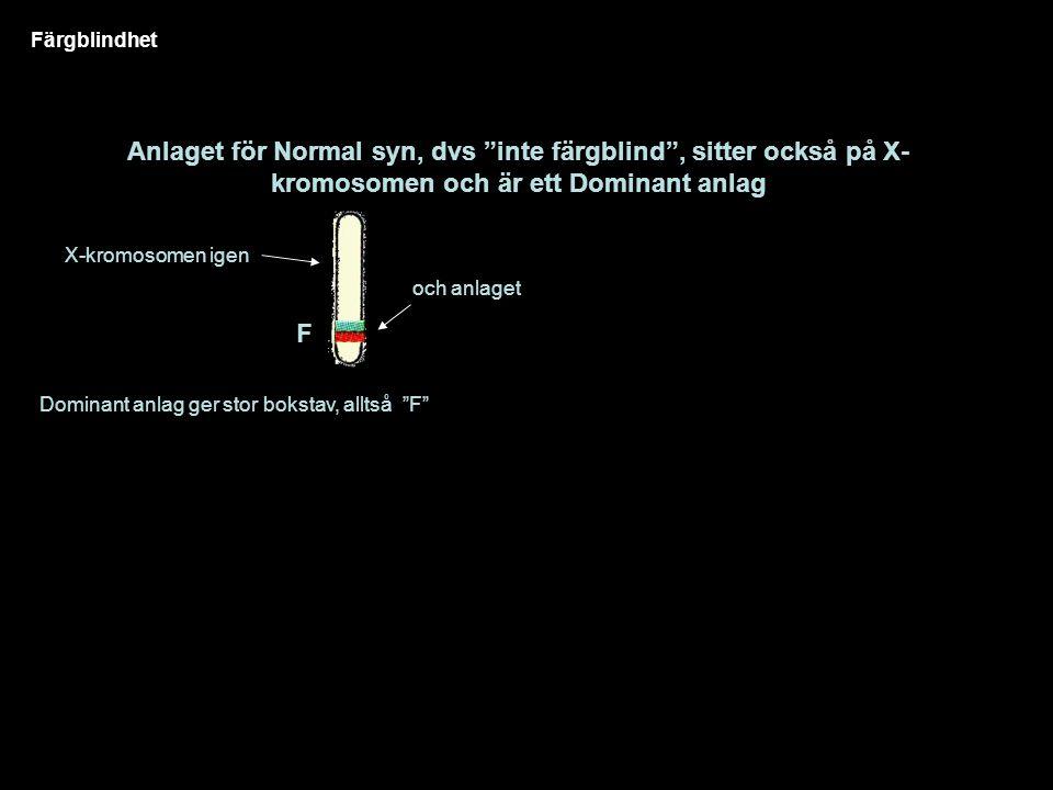 Färgblindhet Anlaget för Normal syn, dvs inte färgblind , sitter också på X- kromosomen och är ett Dominant anlag X-kromosomen igen och anlaget Dominant anlag ger stor bokstav, alltså F F