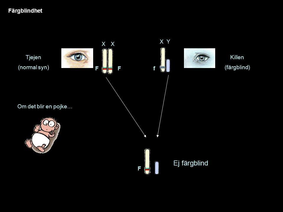 Färgblindhet Tjejen (normal syn) XX Killen (färgblind) FF XY f Om det blir en pojke… F Ej färgblind