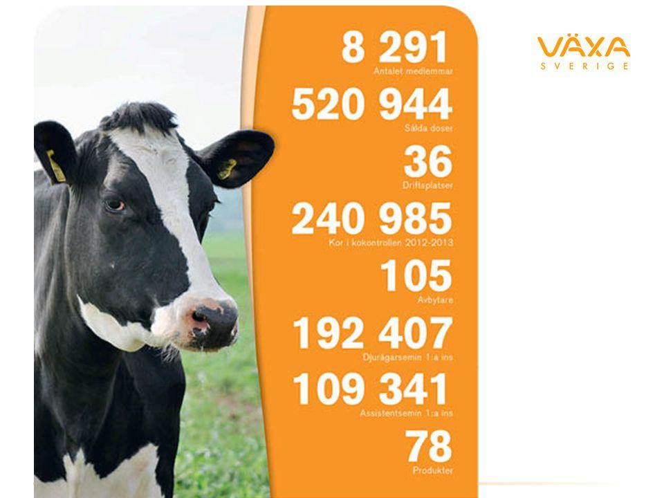 Mission NorFor's affärsidé är att ge svaret på den eviga frågan hur man bäst utfodrar sina mjölk- eller köttdjur dagligen och över tiden.