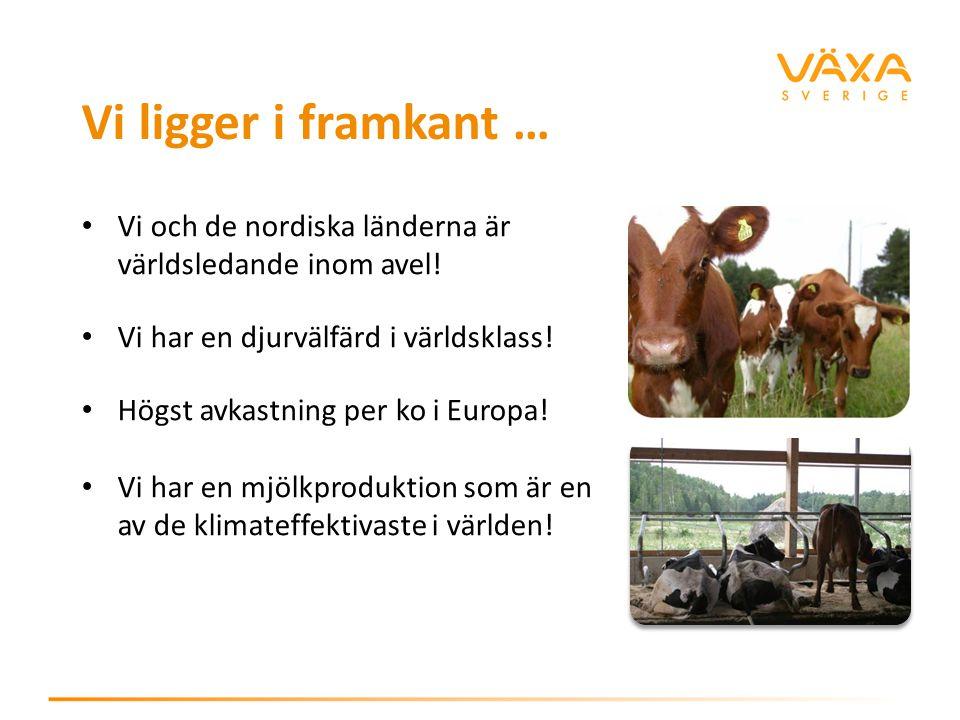 Vi ligger i framkant … Vi och de nordiska länderna är världsledande inom avel! Vi har en djurvälfärd i världsklass! Högst avkastning per ko i Europa!