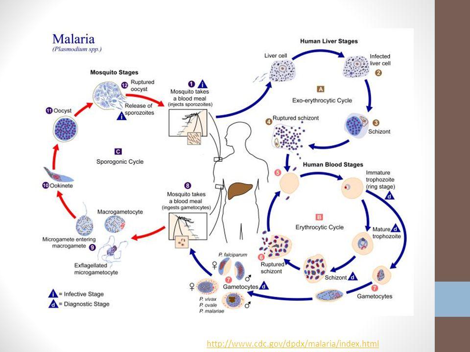 http://www.cdc.gov/dpdx/malaria/index.html