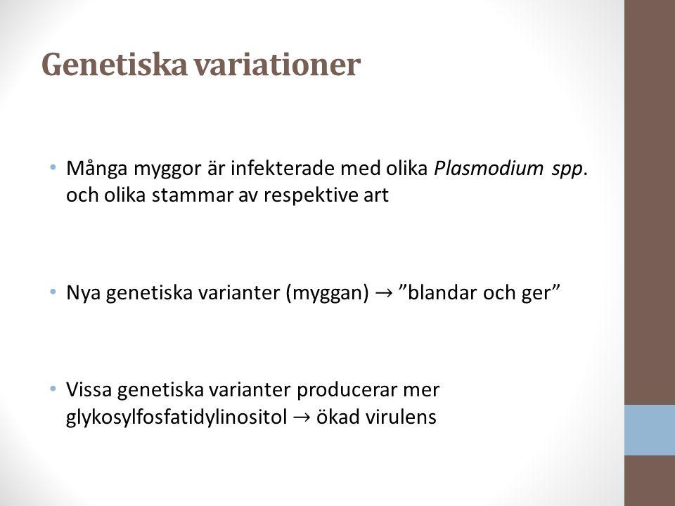 Genetiska variationer Många myggor är infekterade med olika Plasmodium spp.