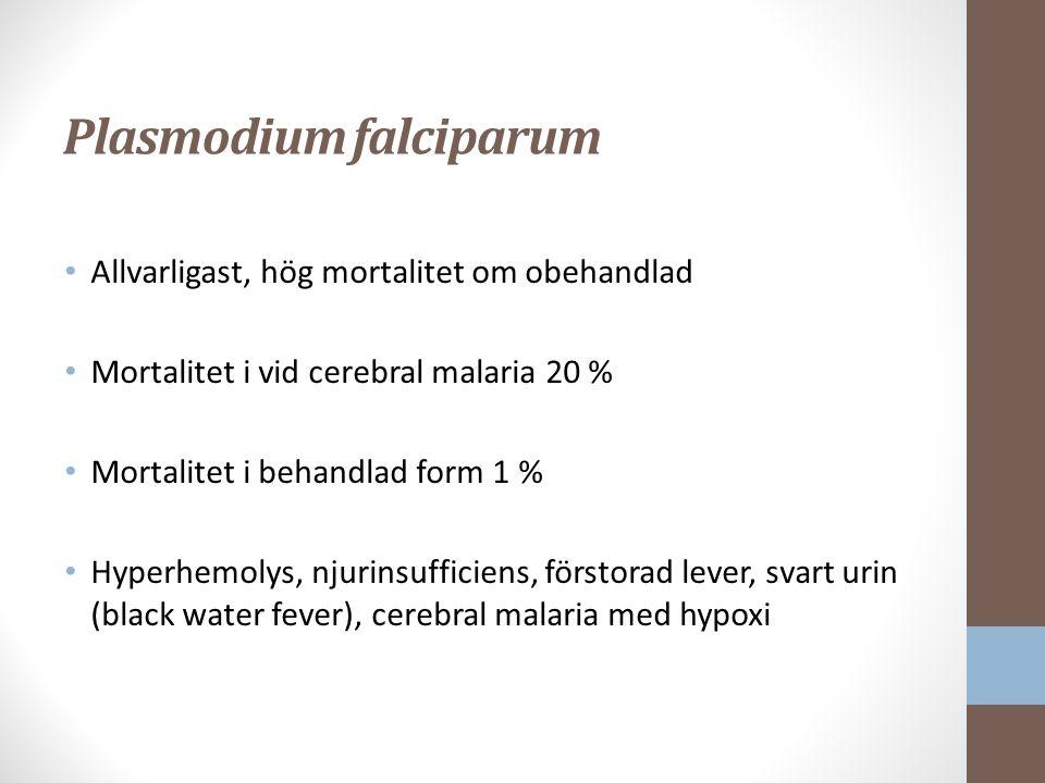 Plasmodium falciparum Allvarligast, hög mortalitet om obehandlad Mortalitet i vid cerebral malaria 20 % Mortalitet i behandlad form 1 % Hyperhemolys, njurinsufficiens, förstorad lever, svart urin (black water fever), cerebral malaria med hypoxi