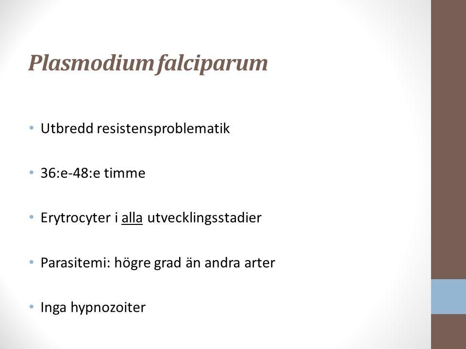Plasmodium falciparum Utbredd resistensproblematik 36:e-48:e timme Erytrocyter i alla utvecklingsstadier Parasitemi: högre grad än andra arter Inga hypnozoiter