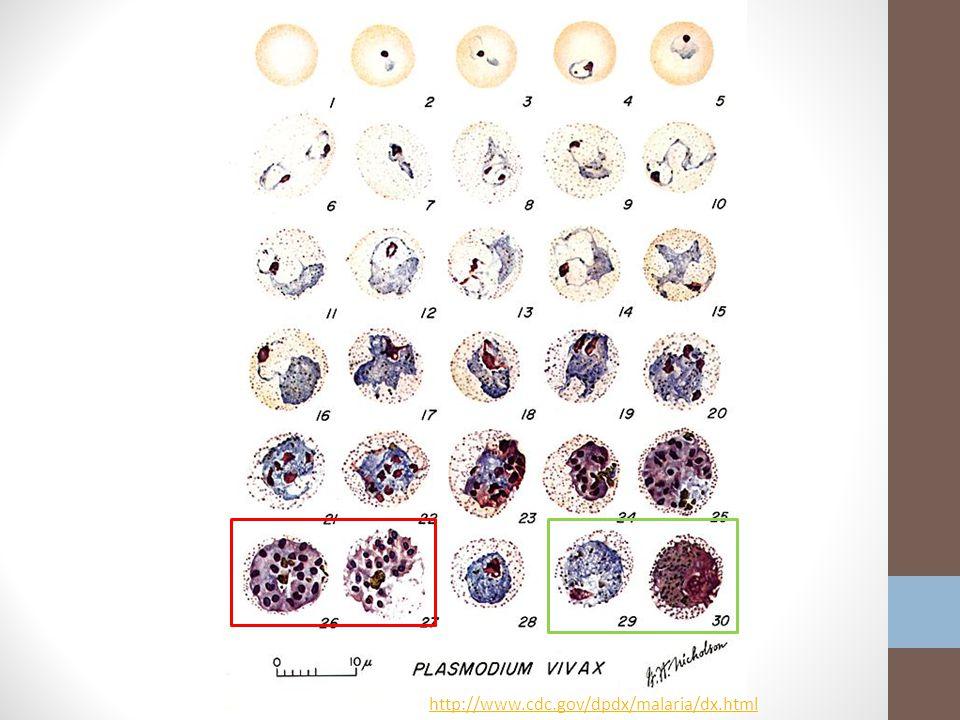 http://www.cdc.gov/dpdx/malaria/dx.html