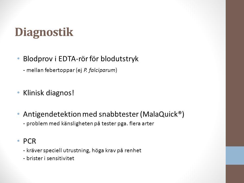 Diagnostik Blodprov i EDTA-rör för blodutstryk - mellan febertoppar (ej P.
