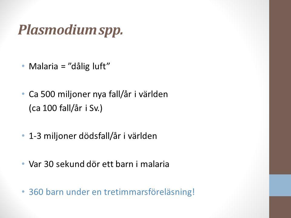 Plasmodium spp.
