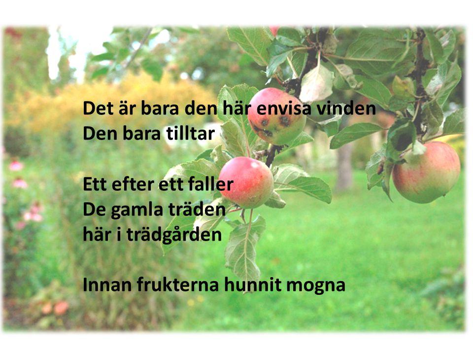 Det är bara den här envisa vinden Den bara tilltar Ett efter ett faller De gamla träden här i trädgården Innan frukterna hunnit mogna
