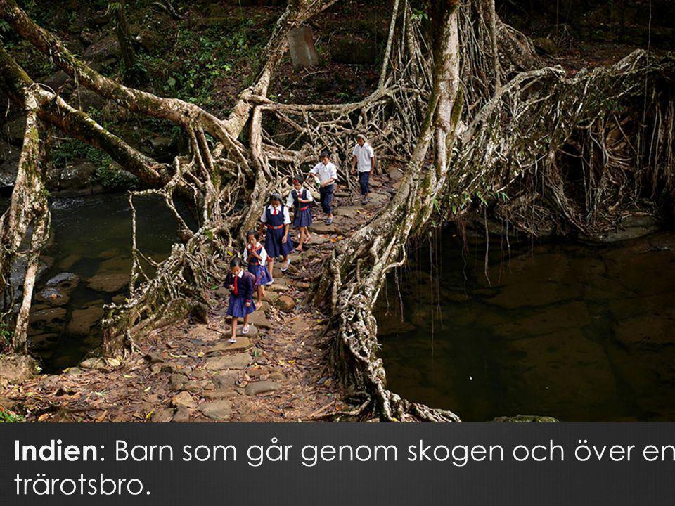 Indien : Barn som går genom skogen och över en trärotsbro.