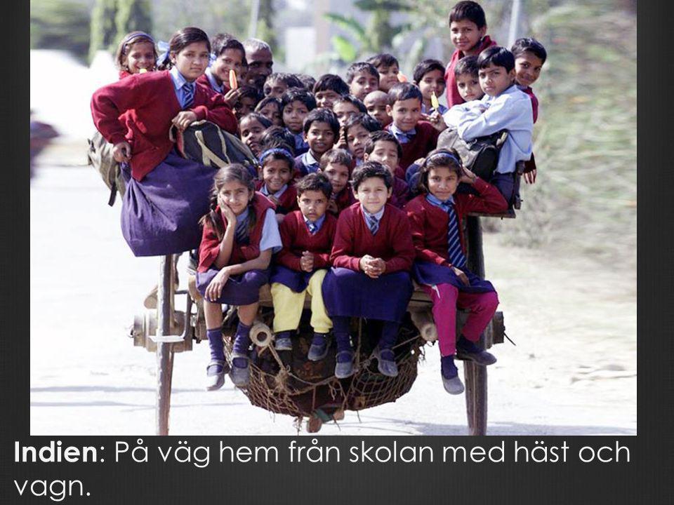 Indien : På väg hem från skolan med häst och vagn.
