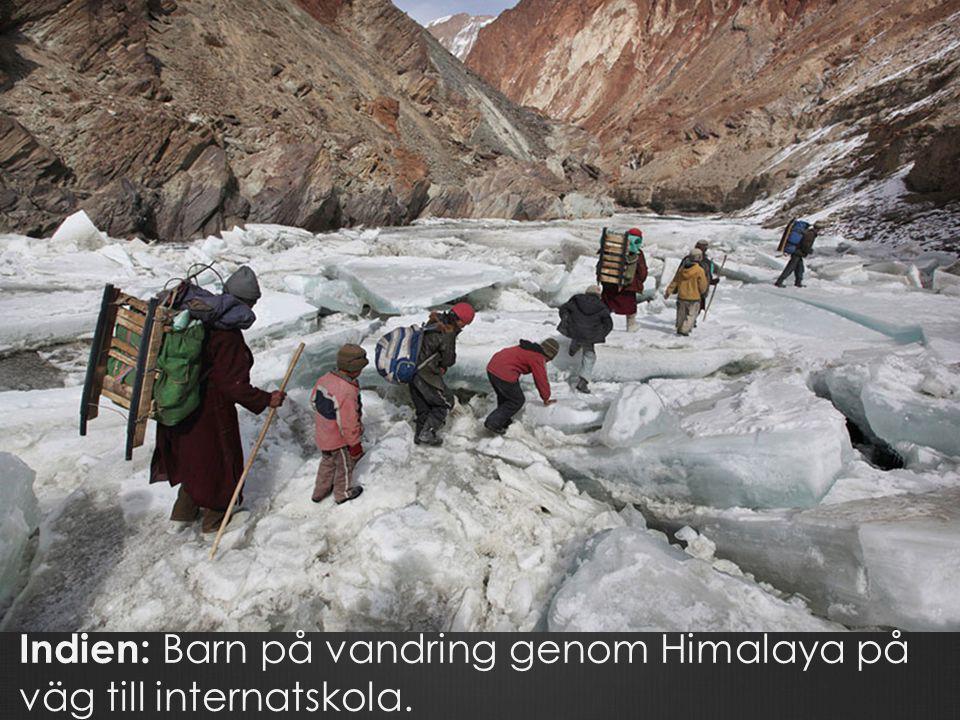 Indien: Barn på vandring genom Himalaya på väg till internatskola.