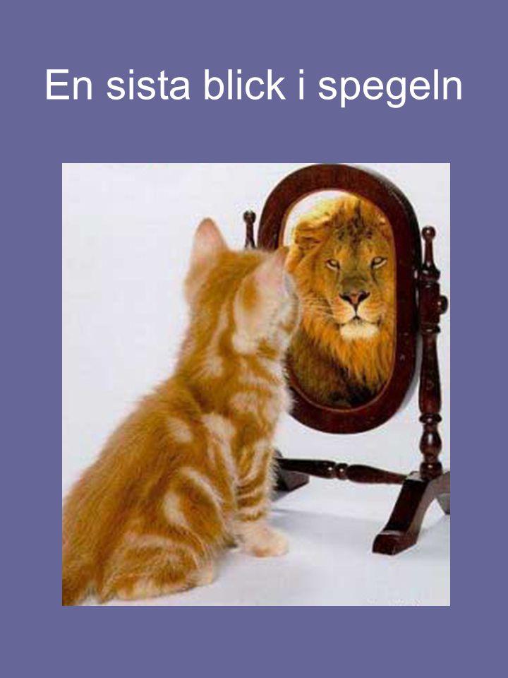 En sista blick i spegeln