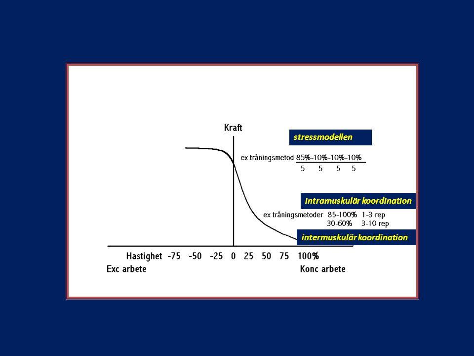 stressmodellen intramuskulär koordination intermuskulär koordination