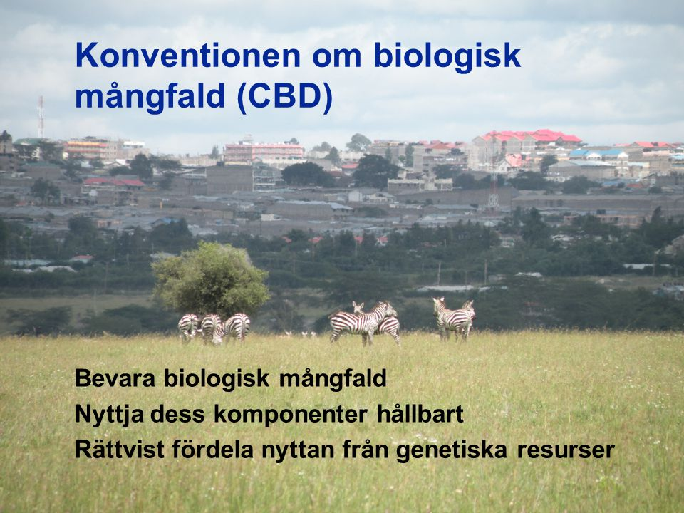 Konventionen om biologisk mångfald (CBD) Bevara biologisk mångfald Nyttja dess komponenter hållbart Rättvist fördela nyttan från genetiska resurser