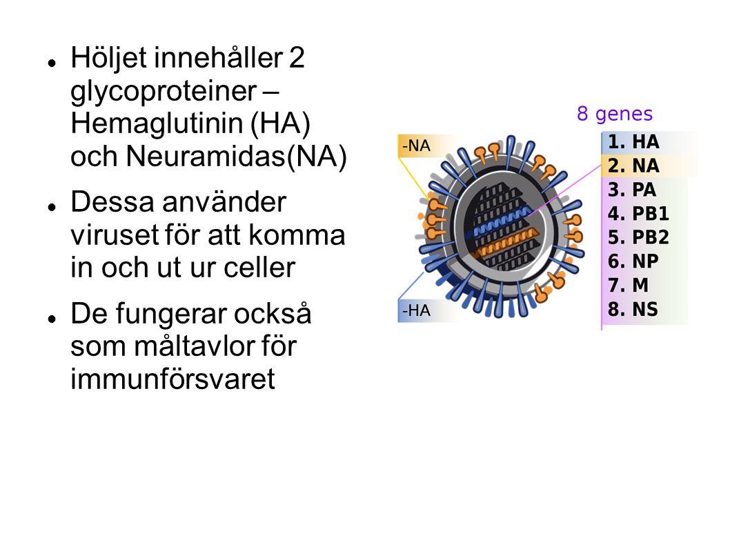 Höljet innehåller 2 glycoproteiner – Hemaglutinin (HA) och Neuramidas(NA) Dessa använder viruset för att komma in och ut ur celler De fungerar också som måltavlor för immunförsvaret