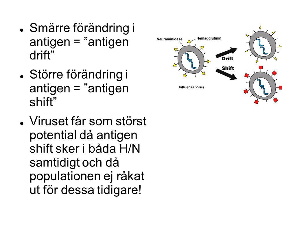 Smärre förändring i antigen = antigen drift Större förändring i antigen = antigen shift Viruset får som störst potential då antigen shift sker i båda H/N samtidigt och då populationen ej råkat ut för dessa tidigare!